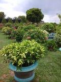 Ogród kwitnie Han Zdjęcie Royalty Free