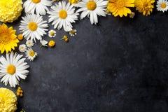 Ogród kwitnie nad kamieniem Zdjęcie Royalty Free