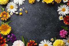 Ogród kwitnie nad kamieniem Fotografia Stock