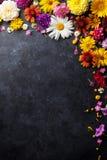 Ogród kwitnie nad kamieniem Obraz Stock