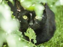 Ogród - śliczny kot w greenery Zdjęcia Royalty Free