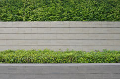 Ogród na ceglanym ogrodzeniu Fotografia Royalty Free