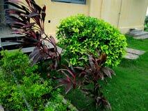 Ogród na nosie obraz royalty free