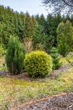 Ogród po zimy obrazy royalty free