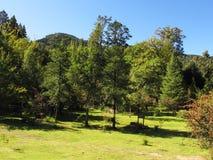 Ogród pokój w Hogsback arboretum, Południowa Afryka Fotografia Royalty Free