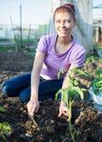 Ogród pracy ogrodowej kobiety pracujący potomstwa Zdjęcie Royalty Free