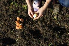 Ogród pracy ogrodowej kobiety pracujący potomstwa Zdrowy Lifesty Zdjęcie Stock