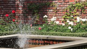 Ogród różany z fontanną zdjęcie wideo