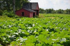 Ogród r w New Hampshire Fotografia Stock