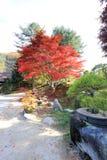 Ogród ranku spokój Zdjęcia Royalty Free
