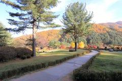Ogród ranku spokój Zdjęcie Royalty Free
