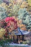 Ogród ranku spokój Fotografia Royalty Free