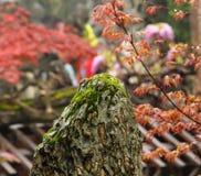 Ogród uwypukla skałę Obraz Royalty Free