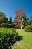Ogród w Auckland domenie zdjęcia royalty free