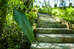 Ogród w Canggu terenie Bali zdjęcia stock