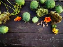Ogród w jesieni Obrazy Royalty Free