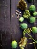 Ogród w jesieni Obraz Royalty Free