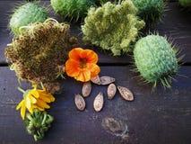 Ogród w jesieni Zdjęcia Stock
