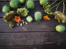 Ogród w jesieni Zdjęcie Stock