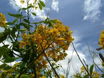 Ogród w kolorach Brazylia Zdjęcia Royalty Free