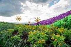 Ogród w ranku Obraz Royalty Free