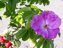 Ogród w ulicach Storkow zdjęcia stock
