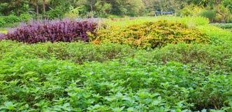 Ogród w zieleni Fotografia Stock