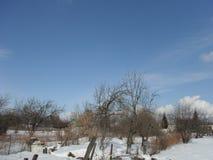 Ogród w zimie Fotografia Royalty Free