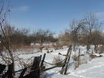 Ogród w zimie Obraz Royalty Free