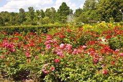 ogród wzrastał Zdjęcia Royalty Free