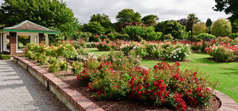 ogród wzrastał Obrazy Royalty Free