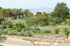 Ogród z drzewkami palmowymi zdjęcia royalty free