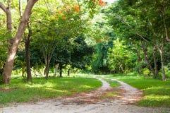OGRÓD Z gazonem I drzewami Zdjęcia Stock
