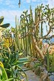 Ogród z kaktusami Obrazy Royalty Free
