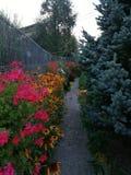 Ogród z kwiatami Zdjęcie Royalty Free