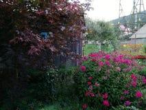Ogród z kwiatami Fotografia Royalty Free