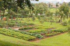 Ogród z różnorodnymi zielonymi warzywami zdjęcie stock