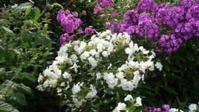 ogród zakwitnąć bystre kwiaty swobodny ruch zbiory wideo