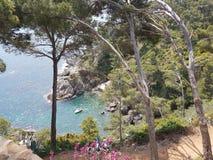 ogródu botanicznego klifu drzew flouers zielony costabrava widzii obrazy royalty free