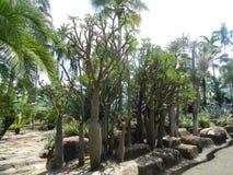 Ogródu botanicznego ogród botaniczny Thailand Zdjęcie Stock