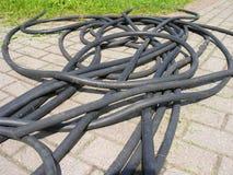 Ogródu botanicznego wąż elastyczny Obraz Royalty Free