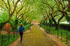 ogródu środkowy park Fotografia Royalty Free