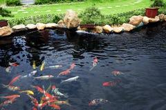 ogródu rybi staw Zdjęcia Stock