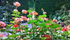ogródy Zdjęcie Stock
