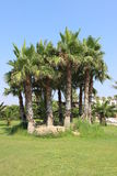 Ogródy blisko Ayia Napa plaży, Cypr Obraz Royalty Free
