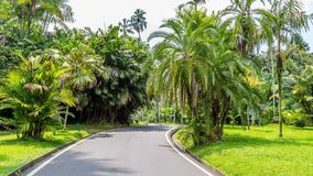 Ogródy botaniczni Bogor, Zachodni Jawa, Indonezja Zdjęcie Stock