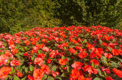 Ogródy botaniczni Trauttmansdorff kasztel, Merano, Włochy Obraz Stock