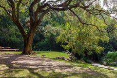 Ogródy Calouste Gulbenkian podstawa fotografia royalty free