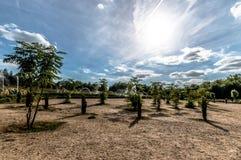 Ogródy przy Versailles Zdjęcie Royalty Free