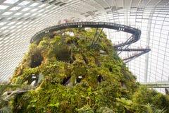 Ogródy Trzymać na dystans Obłoczna Lasowa kopuła w Singapur Obraz Royalty Free